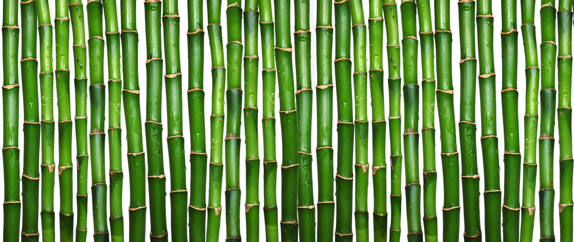 illinois town bans planting bamboo within city limits power plant clipart 3d gas power plant clip art